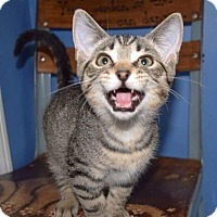 Adopt A Pet :: Mudslide - LaGrange, KY