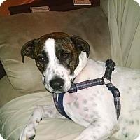 Adopt A Pet :: Aspen - Apex, NC