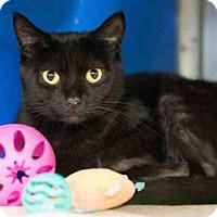 Adopt A Pet :: RUE - Norfolk, VA