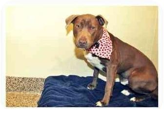 Terrier (Unknown Type, Medium) Mix Puppy for adoption in North Charleston, South Carolina - Arrow