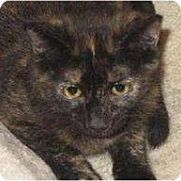 Adopt A Pet :: Dynasty - Tustin, CA