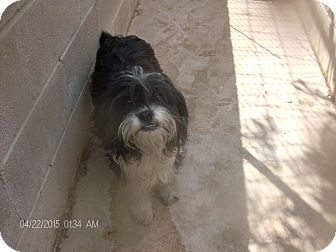 Border Collie/Old English Sheepdog Mix Dog for adoption in KELLYVILLE, Oklahoma - RAGS