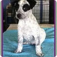 Adopt A Pet :: Rainy - Brattleboro, VT