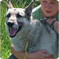 Adopt A Pet :: Ace - Hamilton, MT