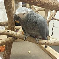 Adopt A Pet :: Jack - Punta Gorda, FL