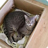 Adopt A Pet :: Dash - Maryville, TN
