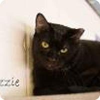 Adopt A Pet :: Lizzie - Middleburg, FL
