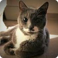 Adopt A Pet :: Timothy - Manchester, CT