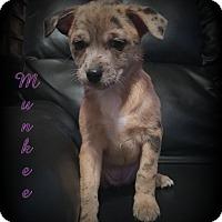 Adopt A Pet :: Munkee - Denver, NC