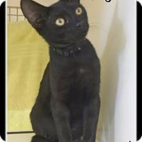 Adopt A Pet :: MichaelAngelo - Orlando, FL