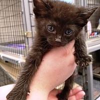 Adopt A Pet :: Sequin - Kalamazoo, MI