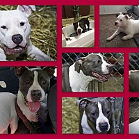 Adopt A Pet :: Rio & Shea - Speedway, IN