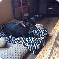 Adopt A Pet :: Diana - East Randolph, VT