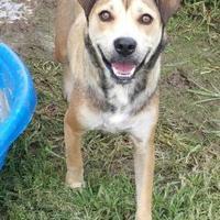 Adopt A Pet :: Wenkee - West Memphis, AR
