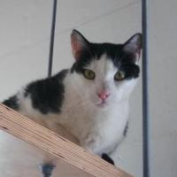 Adopt A Pet :: Zaxby - Land O'Lakes, FL