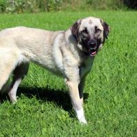 Adopt A Pet :: Bailey-SPECIAL NEEDS - Elkhorn, WI