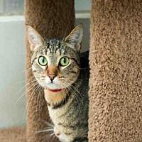 Adopt A Pet :: MIA - Los Angeles, CA