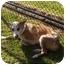 Photo 2 - Australian Cattle Dog Mix Dog for adoption in El Cajon, California - Emmy