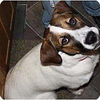 Adopt A Pet :: Molly - Alliance, NE