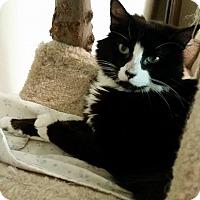 Adopt A Pet :: Sam - Columbia, MD