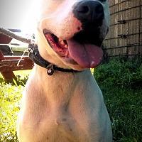 Adopt A Pet :: Montana - Cherry Valley, NY