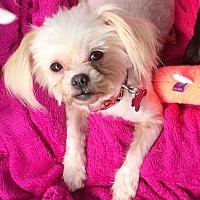 Adopt A Pet :: Precious - Acworth, GA
