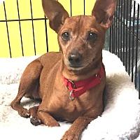 Adopt A Pet :: Dorris - Boca Raton, FL