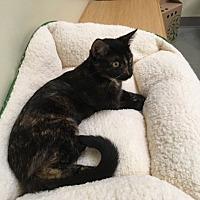 Adopt A Pet :: Lindsey - Sarasota, FL