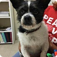 Adopt A Pet :: Buddy - Centerville, GA