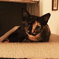 Adopt A Pet :: Mogwai - Waggaman, LA