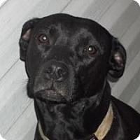 Adopt A Pet :: Karma - Grand Rapids, MI