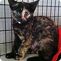 Adopt A Pet :: Pip - Deerfield Beach, FL