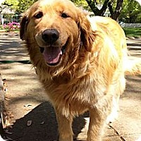 Adopt A Pet :: Jake - New Canaan, CT