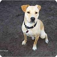 Adopt A Pet :: Kaylee - Jacksonville, FL