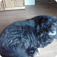 Adopt A Pet :: Bear - Toms River, NJ