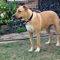 Adopt A Pet :: Libby II - Denton, TX