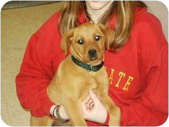 Golden Retriever/Labrador Retriever Mix Puppy for adoption in Mason City, Iowa - Emily