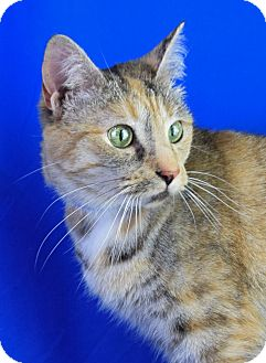 Calico Cat for adoption in Carencro, Louisiana - Penny