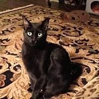 Adopt A Pet :: Winchester - Hamilton., ON
