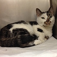 Adopt A Pet :: B-2 - Triadelphia, WV