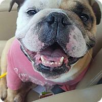 Adopt A Pet :: Mary Jane - Odessa, FL