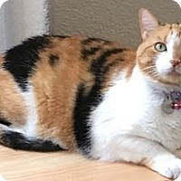 Adopt A Pet :: Belle - Davis, CA