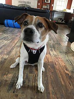 Cattle Dog Mix Dog for adoption in Portland, Oregon - Aubry