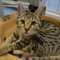 Adopt A Pet :: Laurie P. - Edinburg, TX