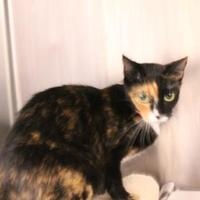 Adopt A Pet :: Kira - Daytona Beach, FL