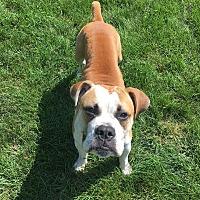Adopt A Pet :: Elo - Sugar Grove, IL