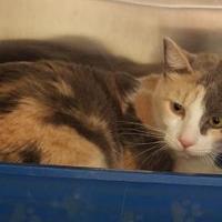 Adopt A Pet :: Smudge - Tulsa, OK