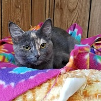 Adopt A Pet :: Kitten 15939 - Parlier, CA