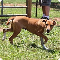Adopt A Pet :: Oprah - Foster, RI