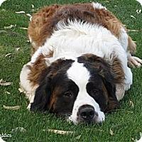 Adopt A Pet :: KRAMER - Glendale, AZ